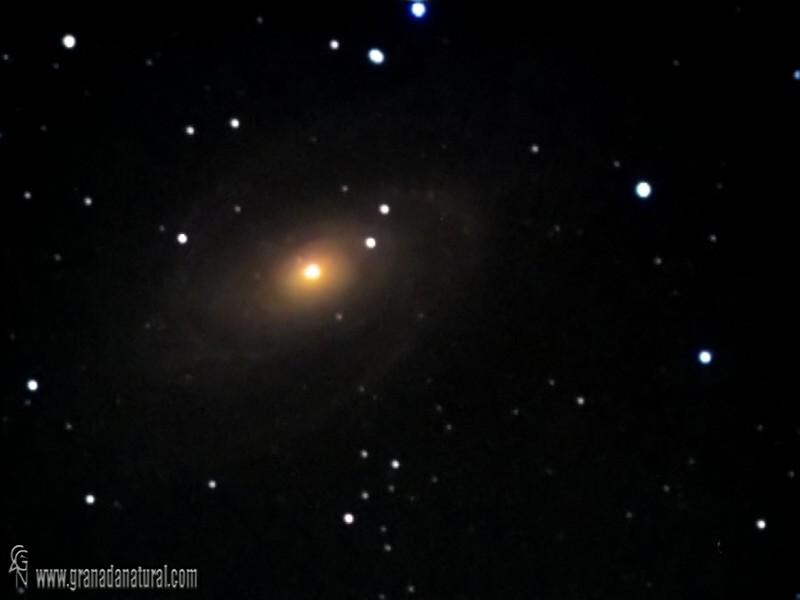 Galaxia de Bode M 81 NGC 3031