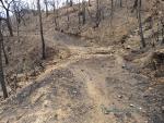 Incendio Alcornocal de Lújar 1