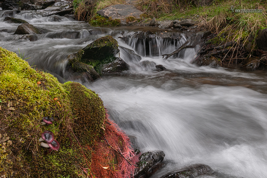 Russula fragilis. Hongos de Granada