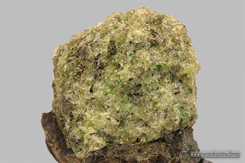 Olivino