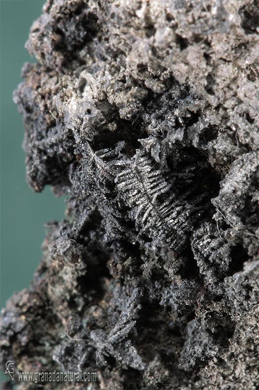 Agregado dendritico de plata