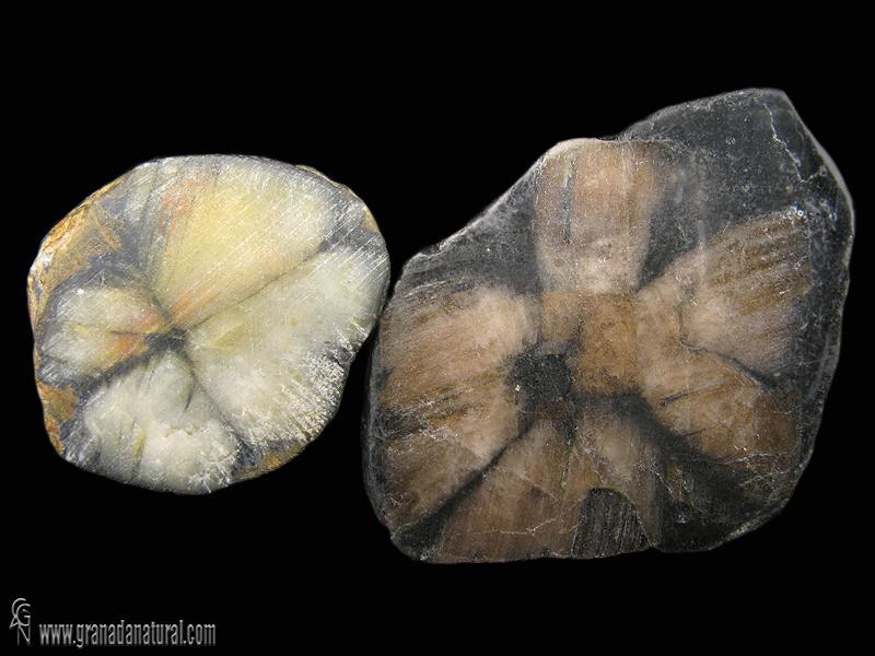 Quiastolita