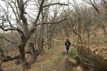 Entre robles: Acequia de Almiar (Sierra Nevada)