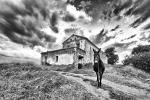 Mulo en Haza del Lino (Contraviesa). Paisajes de la Alpujarra