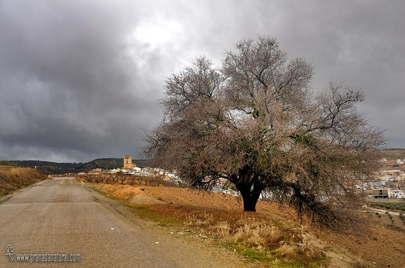 Almendro y Alhama de Granada. Paisajes de Granada