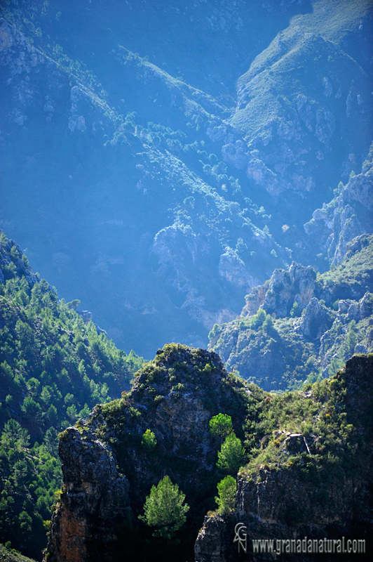 Ruta al rio Verde en la Almijara.