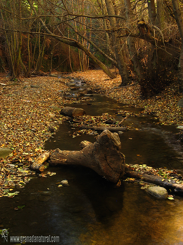 Barranco del r�o Alhor�.