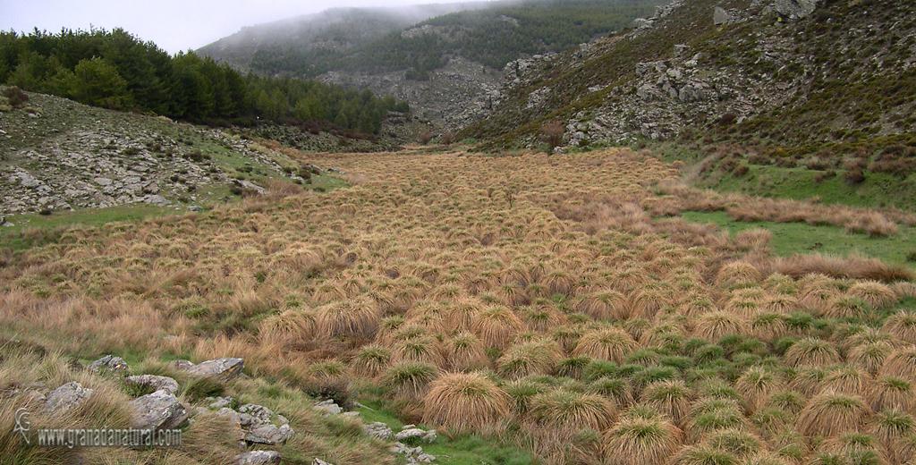 Granada natural macollas en el ro balax sierra de baza - Baza granada fotos ...