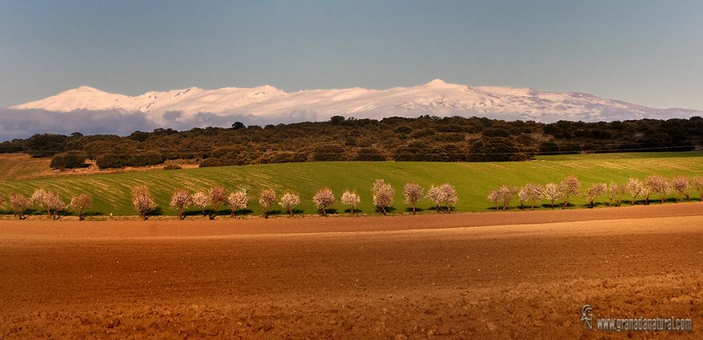 Sierra Nevada y el temple granadino. Paisajes de Granada