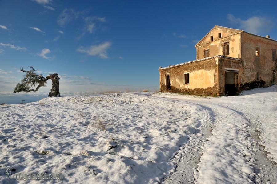 Cortijo y alcornoque de Haza del Lino nevado. Paisajes de Granada