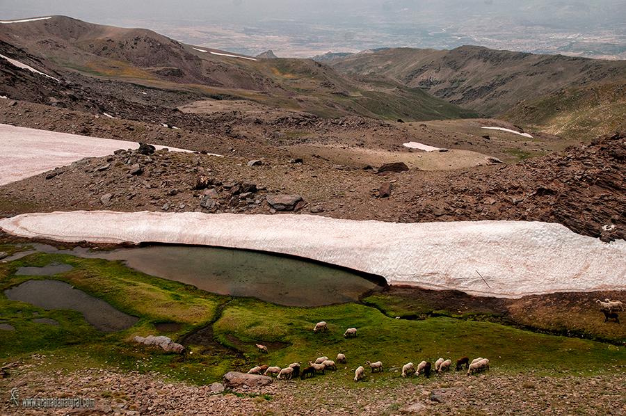 Lagunilllo de la Ermita- lagunas de sierra nevada
