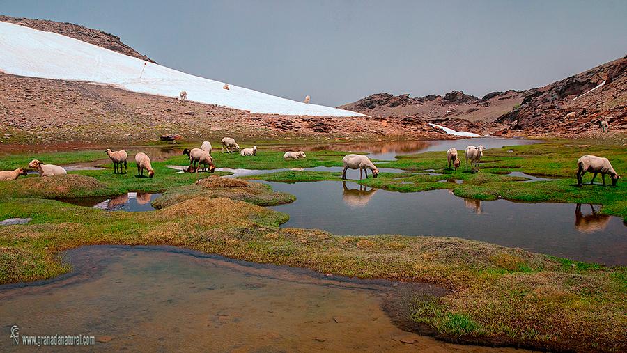 Lagunillos de la Virgen. Lagunas de Sierra Nevada.