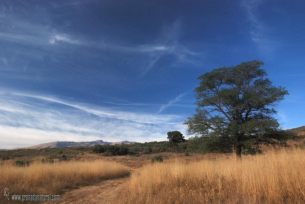 Llano de los Pozos. Sierra de Lújar.