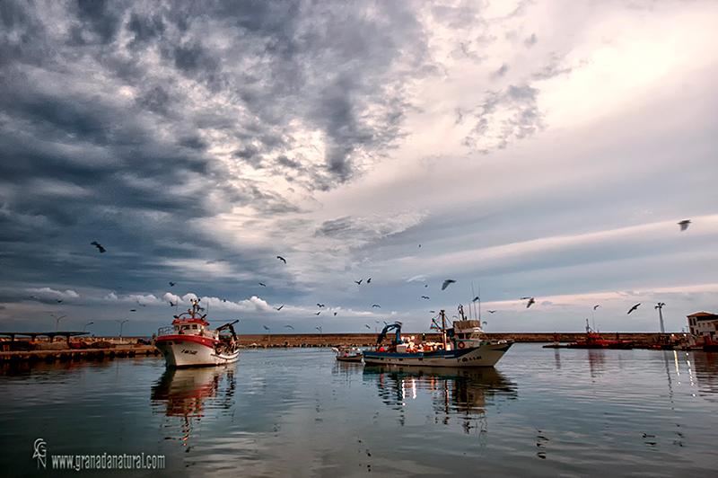 Puerto pesquero de Motril. Barcos