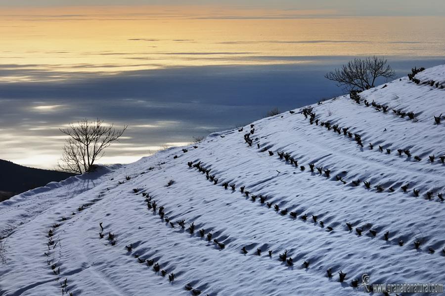 Viñas nevadas en la Contraviesa. Paisajes de Granada